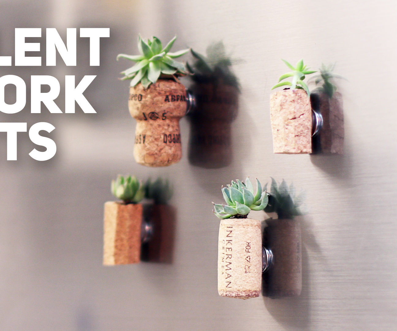 Cork Magnets With Succulent