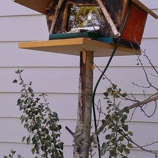 Image Capturing Bird Feeder