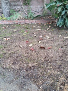 Prepare the Ground and Plant Grass Seeds