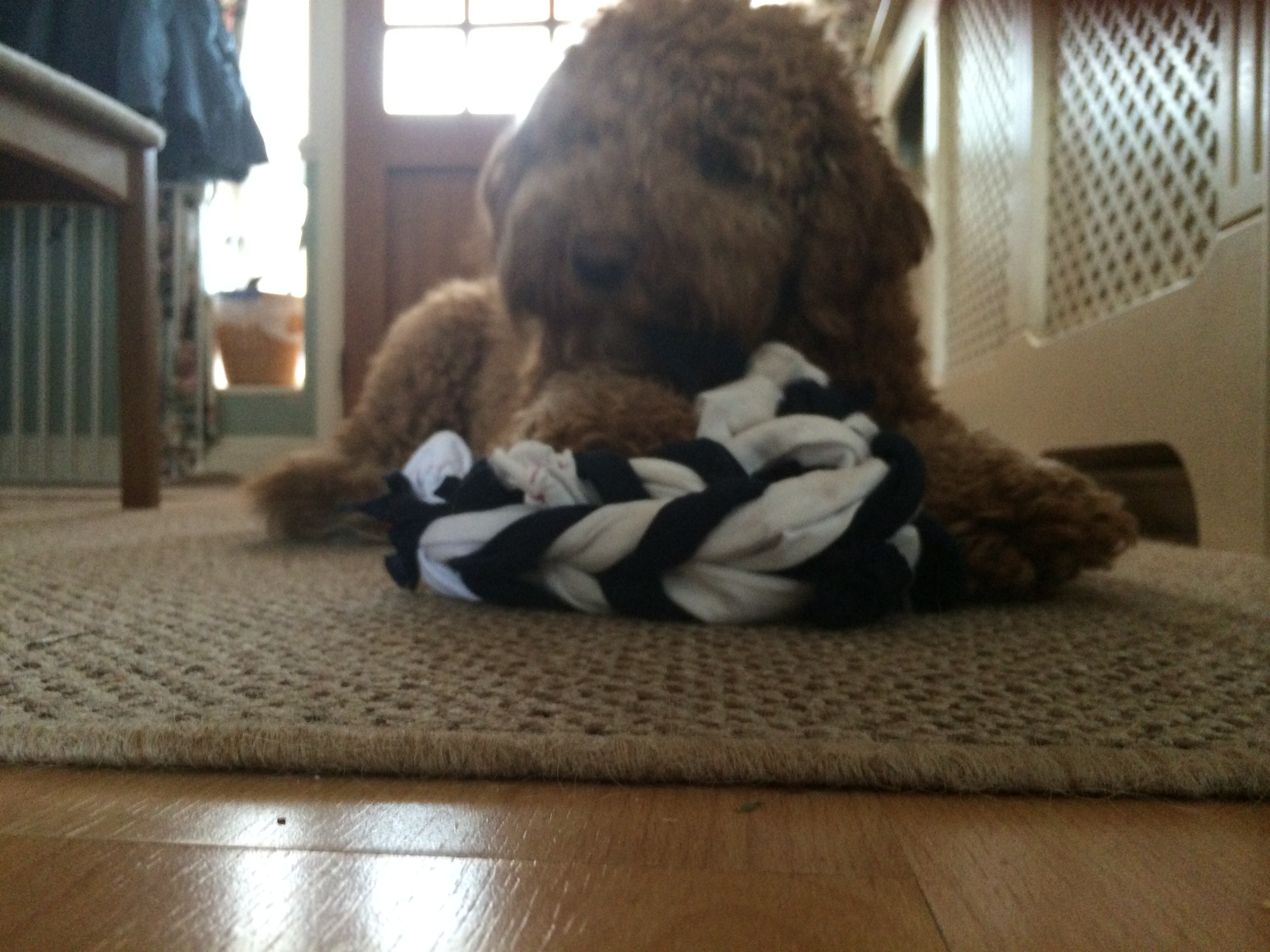 fishtail ring dog toy