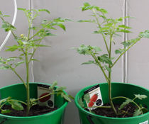Ground Any Plants For Optimal Results In Growth Rates
