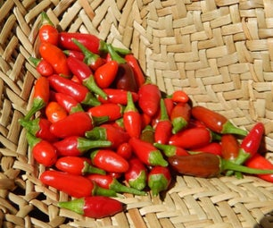 Fast, Free and Easy Solar Dried Chillies