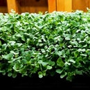 Making a Stand for Micro Greens