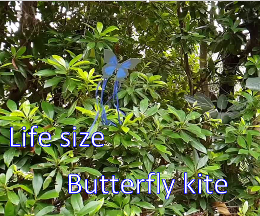 Life Size Butterfly Kite