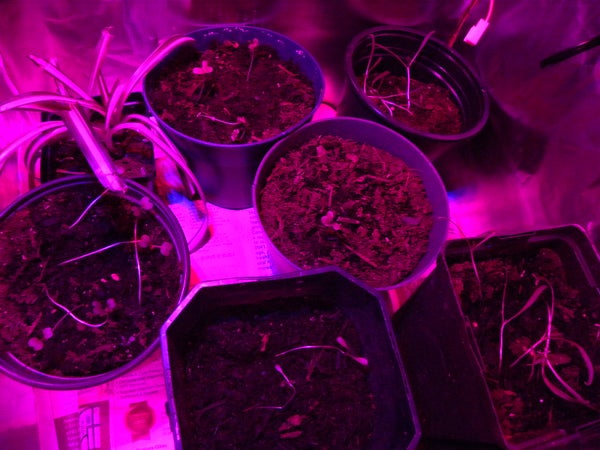 24 Watt LED Grow Light With Brightness Control
