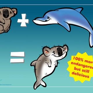 Koala Dolphin-800x600.jpg