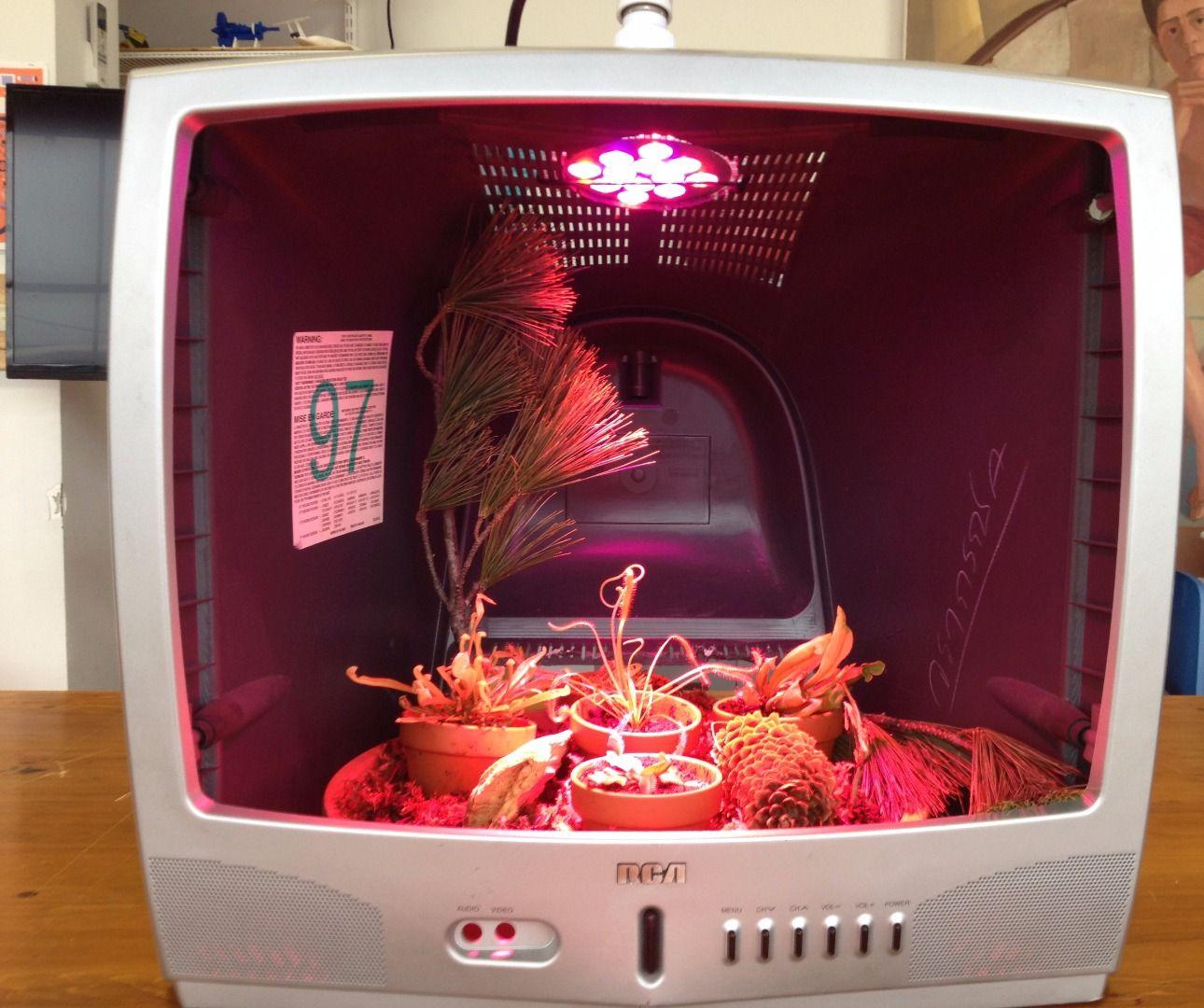 Full Spectrum Carnivorous Plant Terrarium in an Old TV