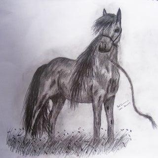 Une horse drawings 020.jpg