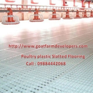 poultry farm with plastic slatted floor.jpg