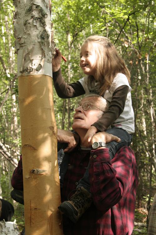 Harvesting Birch Bark