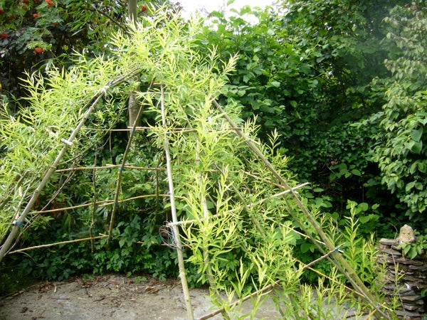 How to Grow Green Teepees in All the Drylands ?