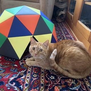 Cardboard Geodesic Dome