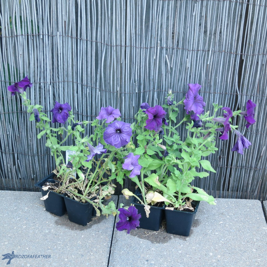 Plant and Soil Choice
