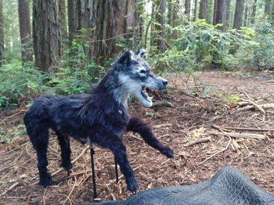 Wolf Puppet for Music Video