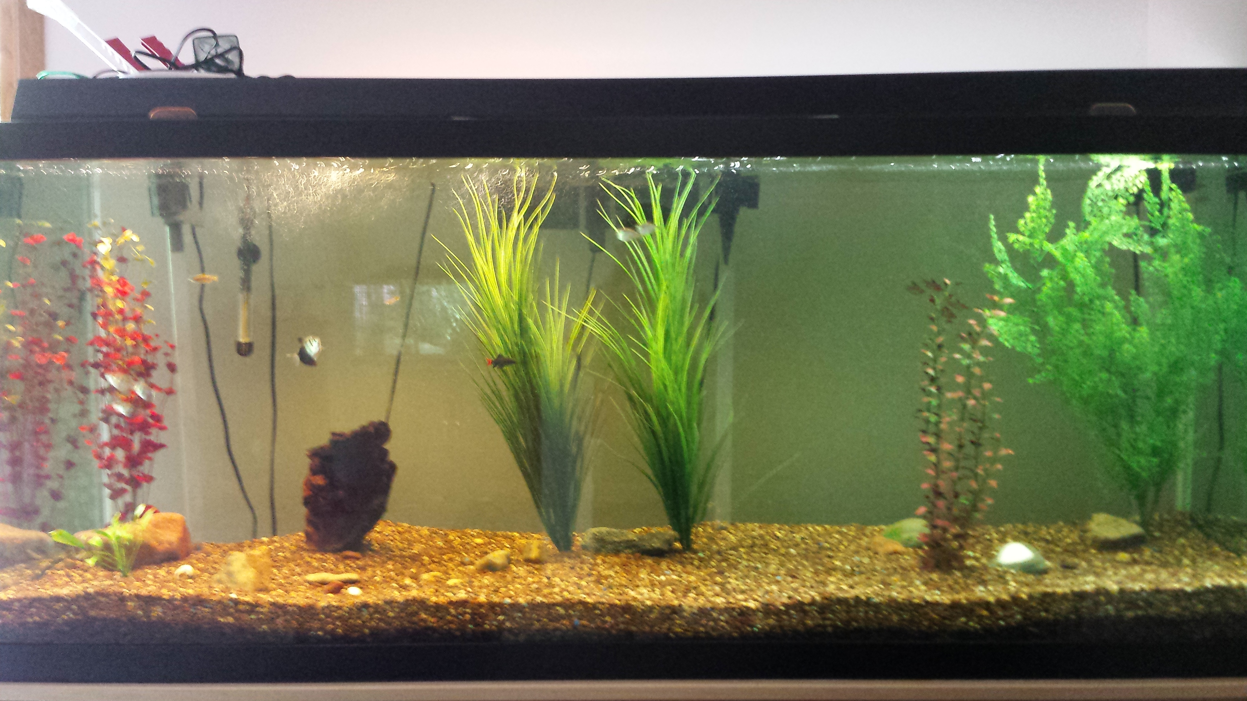 DIY: How to set up a fish tank