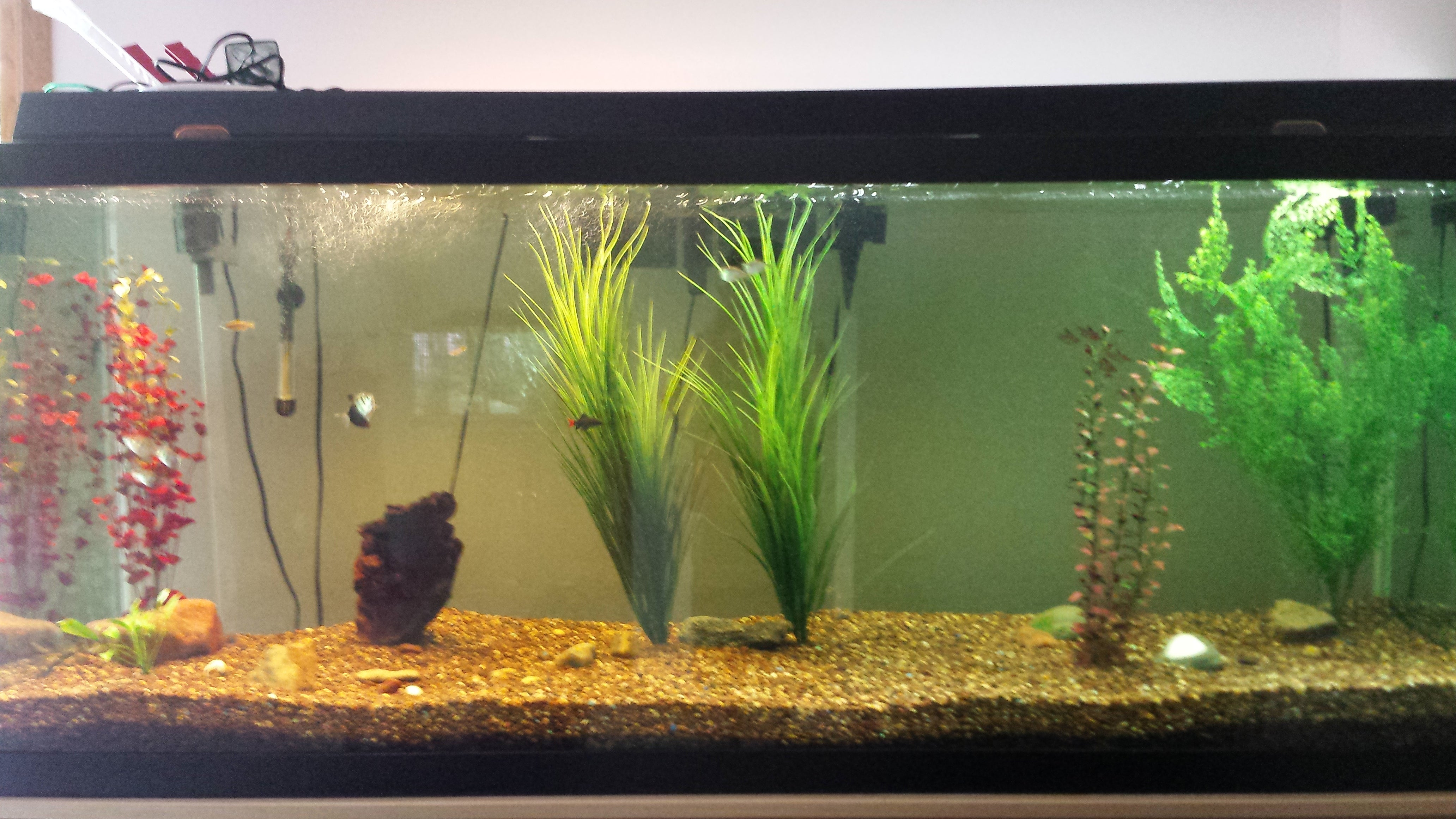 Diy How To Set Up A Fish Tank 9 Steps With Pictures Instructables