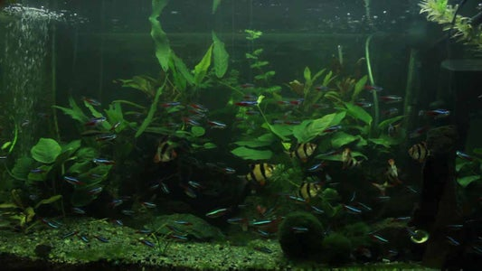 DIY Aquarium LED Light