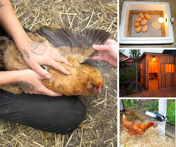 15 Projects for Raising Backyard Chickens