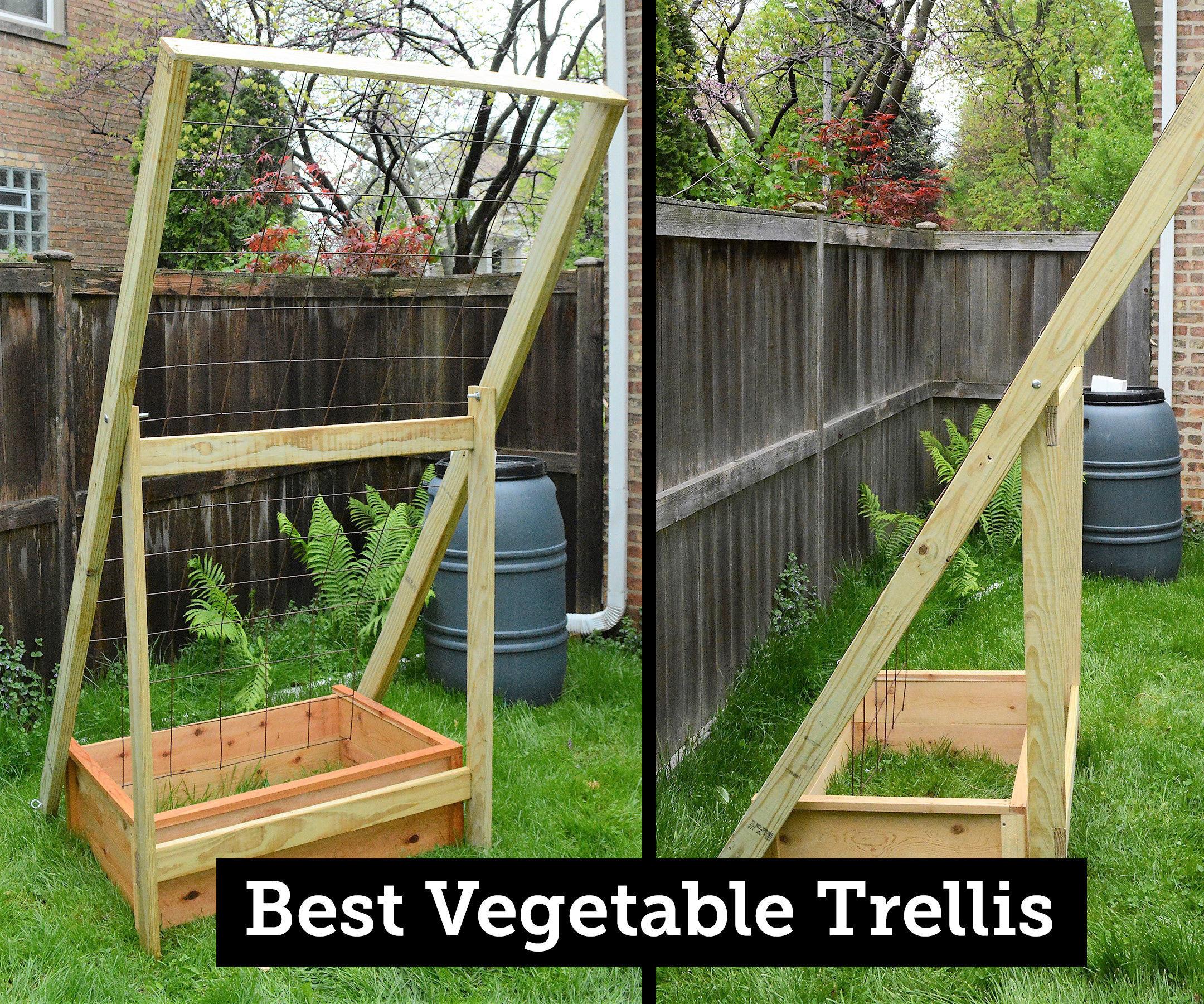 The Best Vegetable Trellis: Durable, Collapsible, Flexible