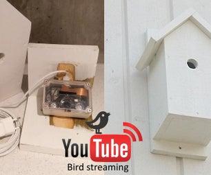 YouTube Streaming Bird Box