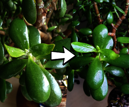 How to Kill Fluffy White Mould on Plants