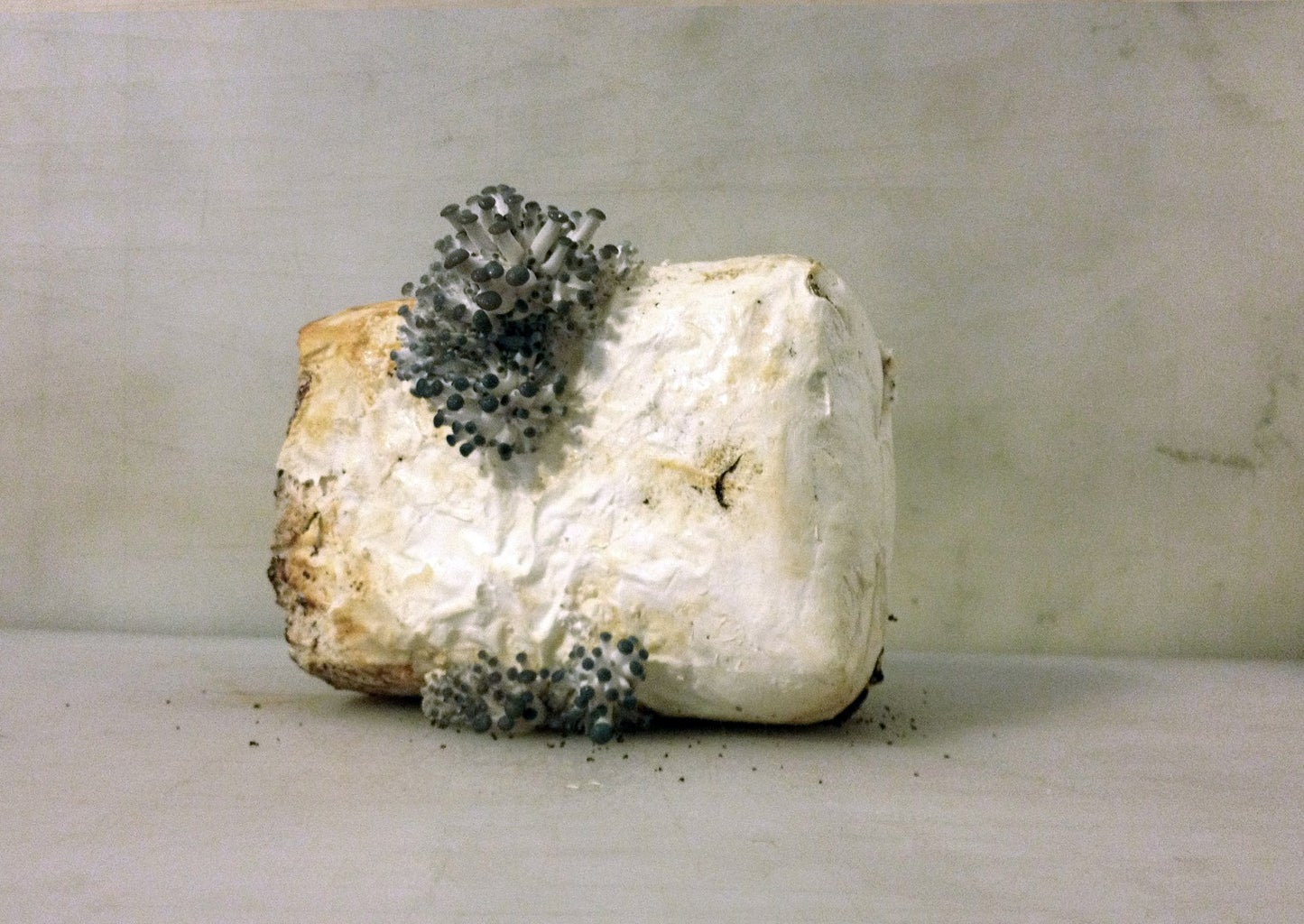 Get Mycelium