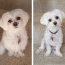 DIY Dog Grooming - Save $500/YR