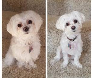 DIY Dog Grooming - Save $500/YR