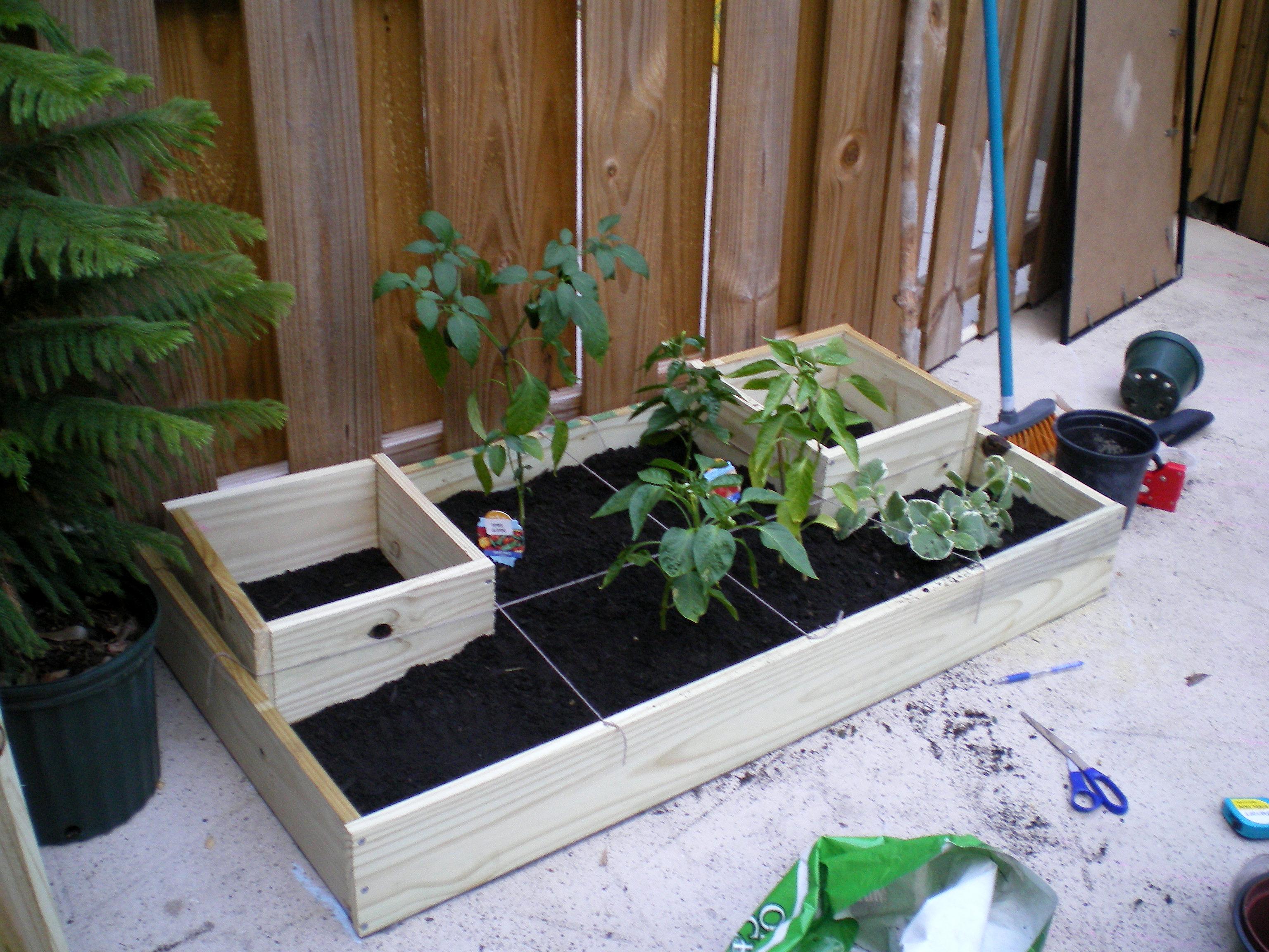 Urban Homestead Garden (squarefoot gardening abridged)