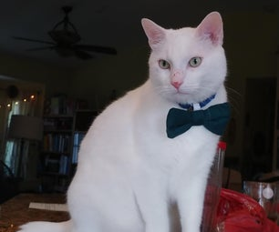 How to Make a Bowtie for Your Cat