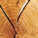 Choosing Greener Wood