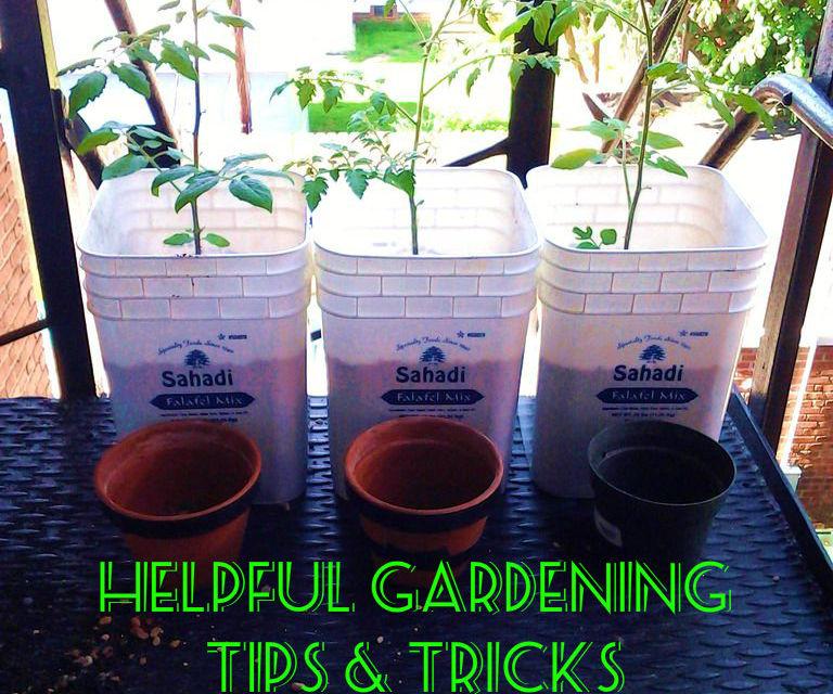 indoor tomato grower - bucket update