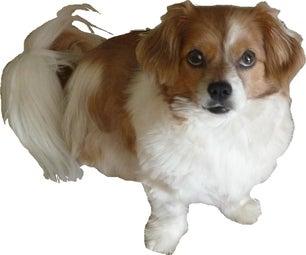 Walter My Dog Sponsering Lost Puppet
