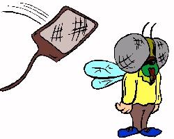 Fruit Fly/Gnat Catcher