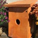 House Finch Birdhouse