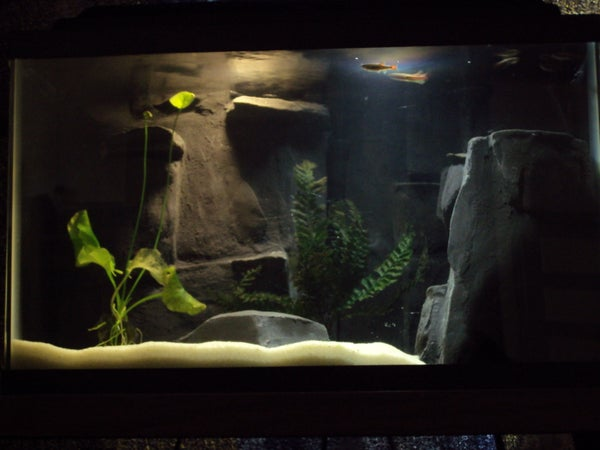 River Aquarium With Custom Concrete 3D Background