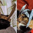 Thor and Loki Cat Helmets