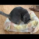 Cat Bed from Recycled Material