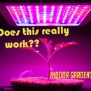 Classroom Grow Lights
