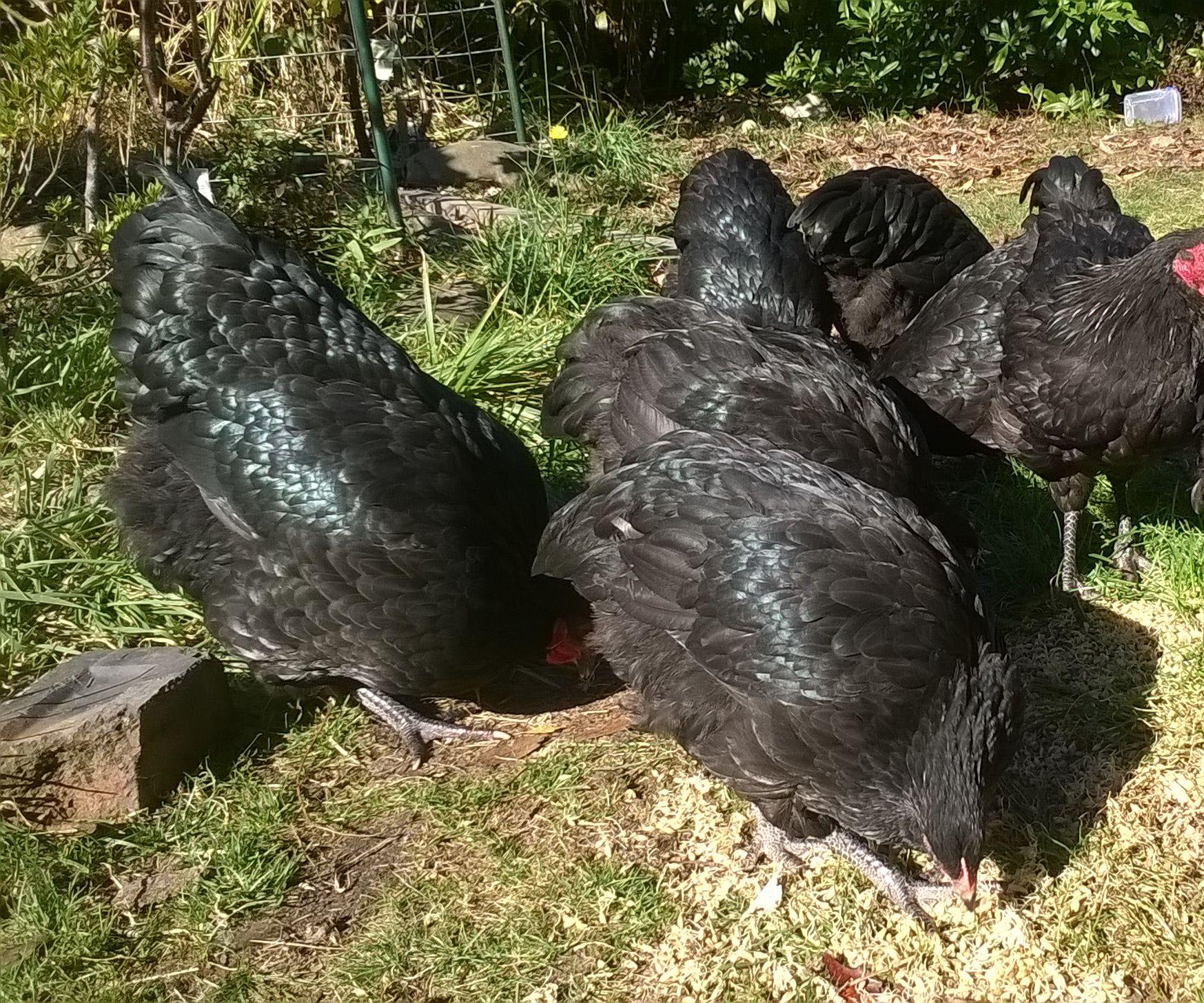 Improved fodder growth system