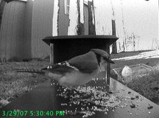 Wireless Bird Feeder Webcam