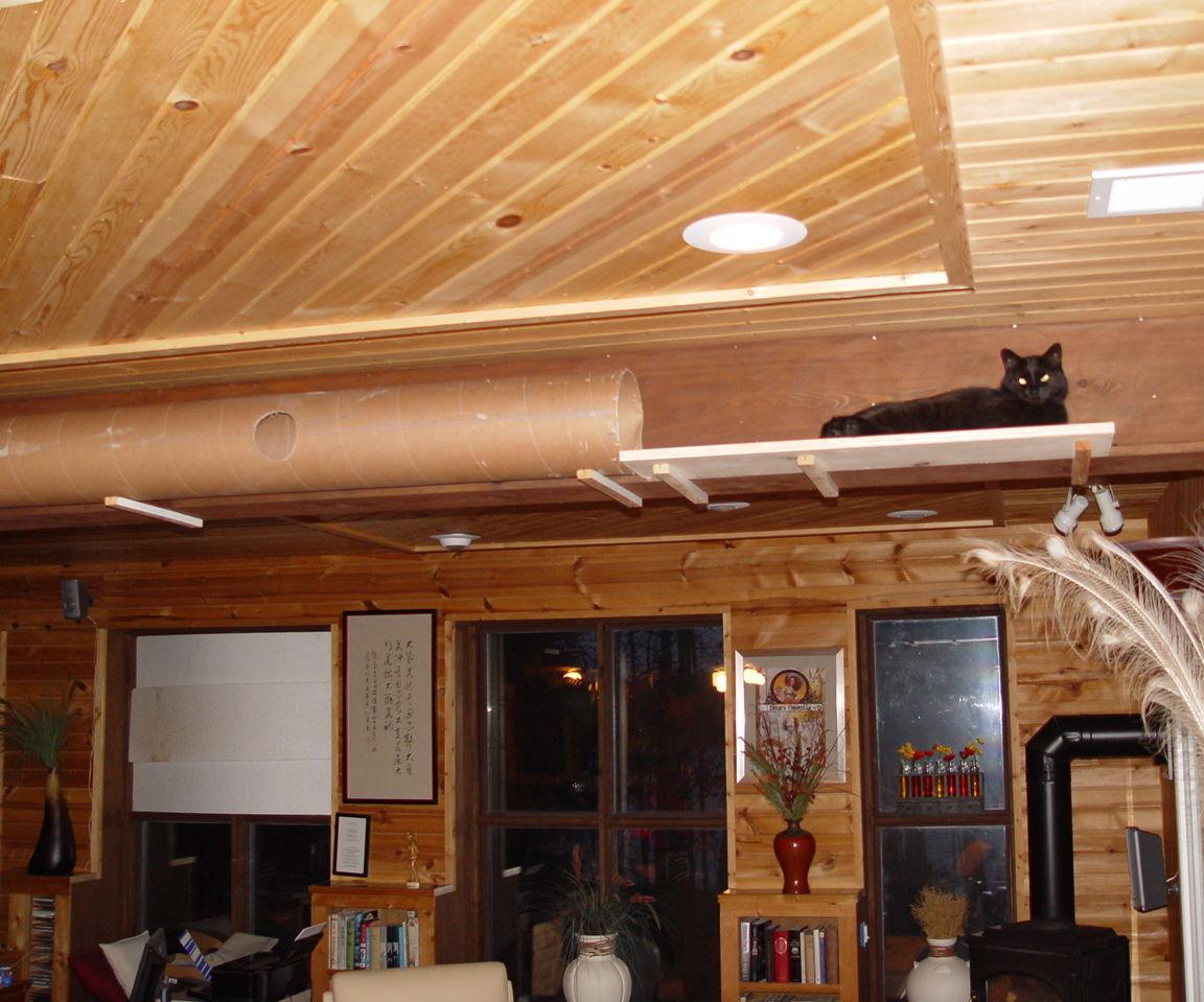 Jumbo Cat Maze