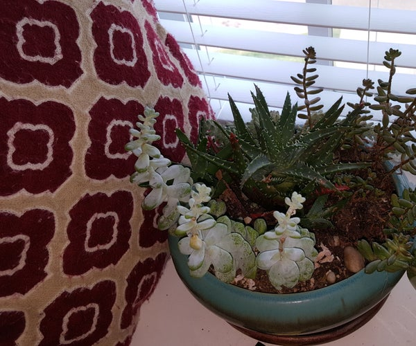 How to Raise Succulents