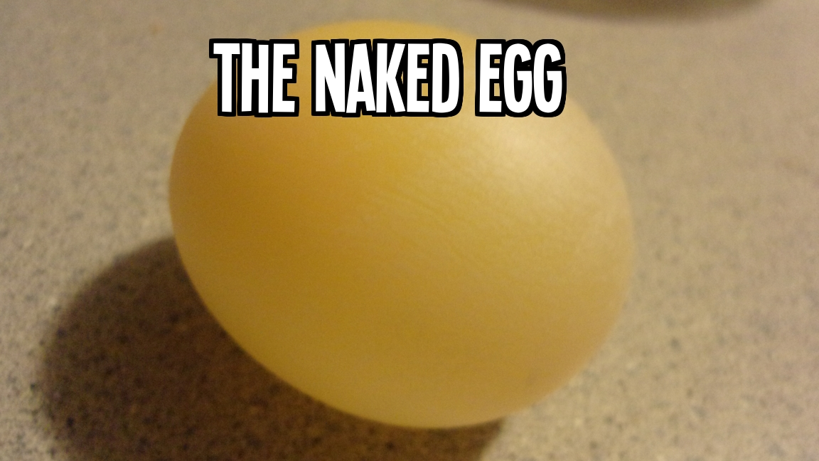 The Naked Egg: Make an ordinary egg wobbly, bouncy, and squishy using the Scientific Method!