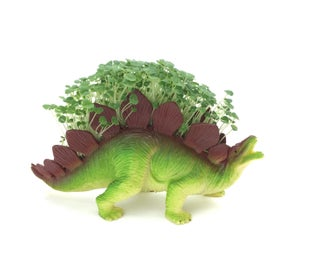 The Mythical Indoor Plantersaur