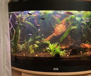 Freshwater Aquarium for Beginners