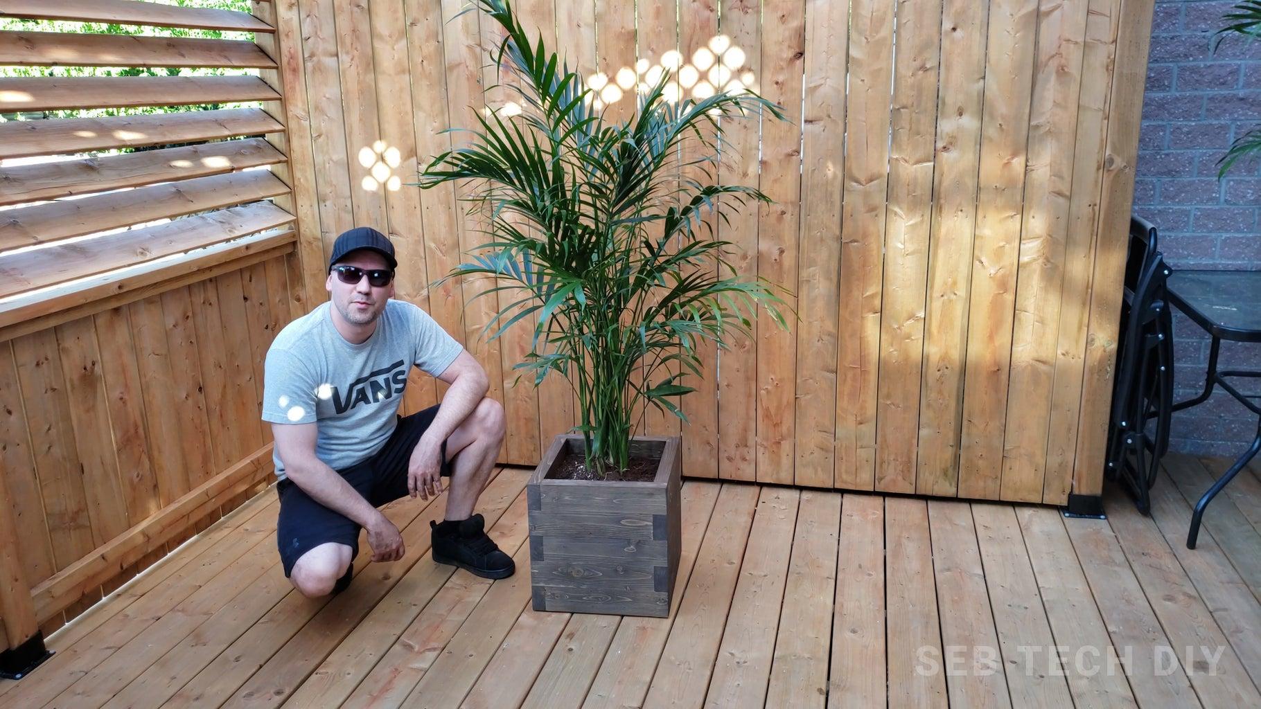 Adding the Cataractarum Palm
