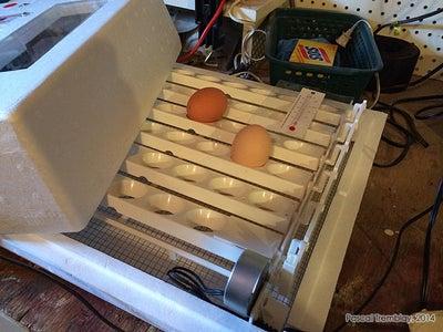 Setting Incubator.