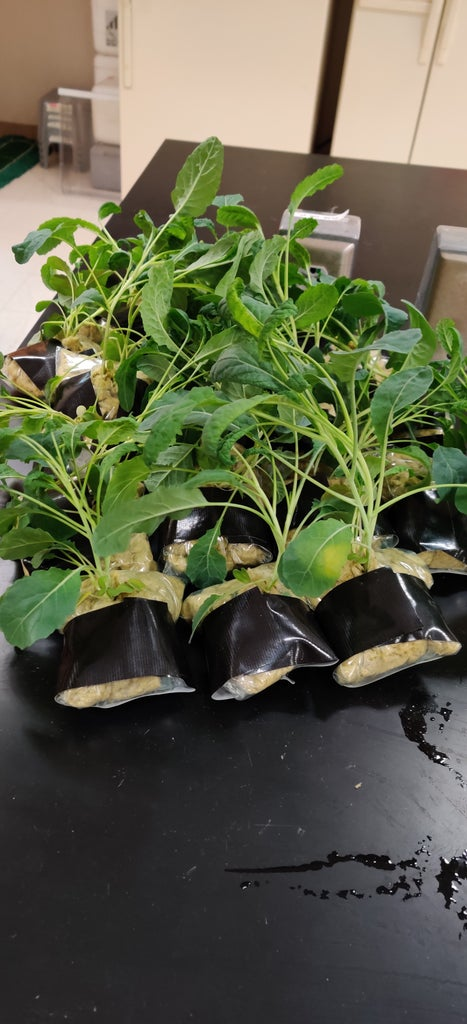 Planting Pouches and Watering Tubes