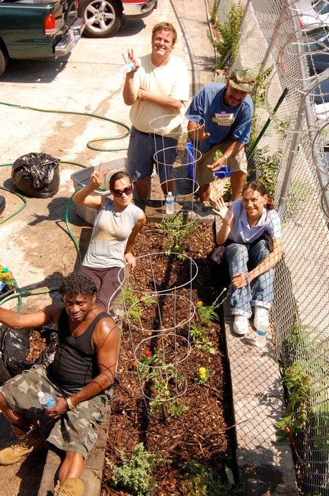 Urban Asphalt Organic Garden
